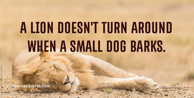 A Lion Doesn't Turn Around When A Small Dog Barks.