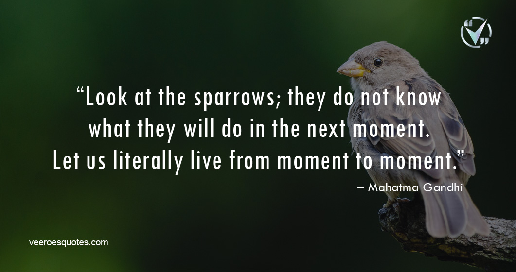 Look at the sparrows; they do not know what they will do in the next moment. Let us literally live from moment to moment. – Mahatma Gandhi