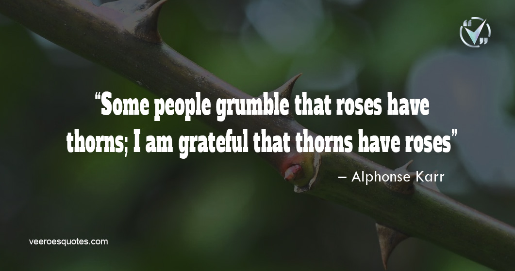 Some people grumble that roses have thorns; I am grateful that thorns have roses. – Alphonse Karr