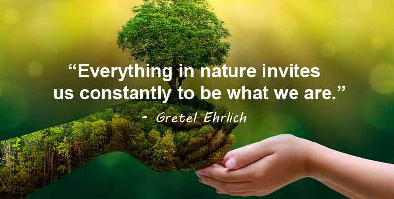 everything in nature invites