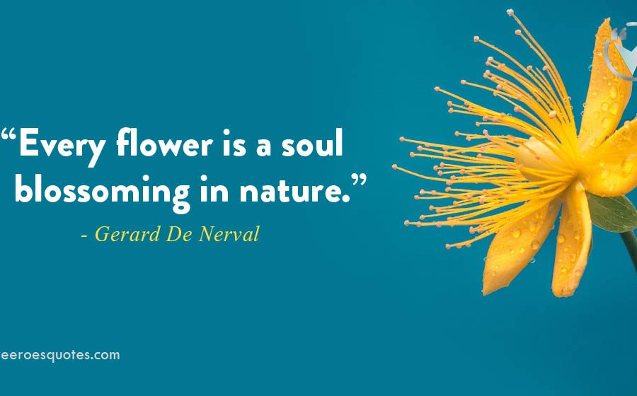 every flower is a soul
